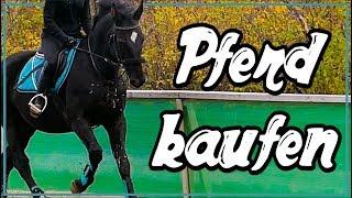 Pferd kaufen ✮ PROBEREITEN Black Beauty ♥