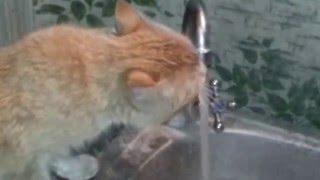 Кот после корпоратива.