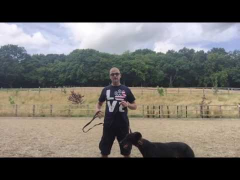 Quick tips on teaching your dog loose lead walking