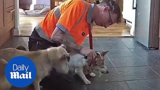 Man saves a choking Jack Russell terrier with Heimlich maneuver