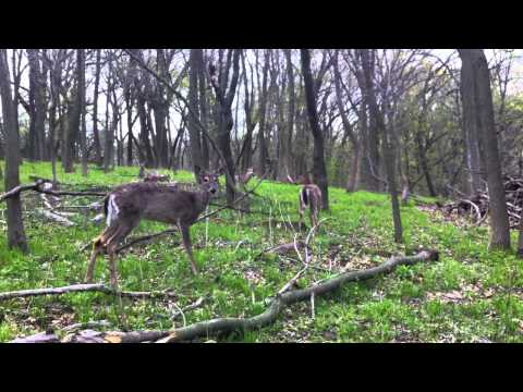 Tons Of Deer - Jewell Park