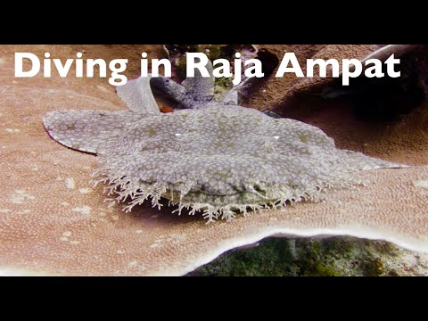 Raja Ampat Islands - Diving with Manta Rays in Papua, Indonesia