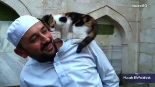 Man opens Mosque doors for stray cats, melting hearts worldwide