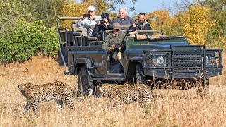 Leopard with Impala - LIVE from MalaMala!
