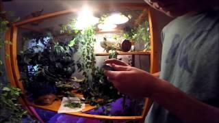 Video Unboxing a blue iguana download MP3, 3GP, MP4, WEBM, AVI, FLV Januari 2018