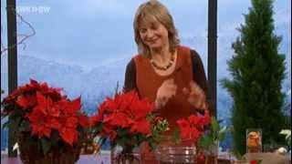 Festlicher Strauß mit Weihnachtsstern | SWR Kaffee oder Tee