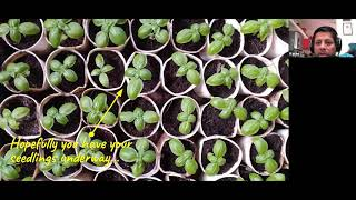 Ask Me Anything (AMA): on preparing pots for growing, soil improvement and direct sowing