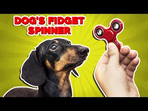 EXPERIMENT Dog VS Fidget Spinner