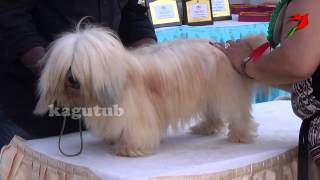 The Maltese Is A Small Breed Of Dog In The Toy Group