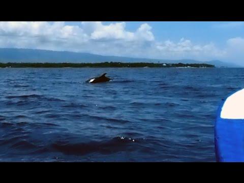 Pilot Whales on the Tañon Strait