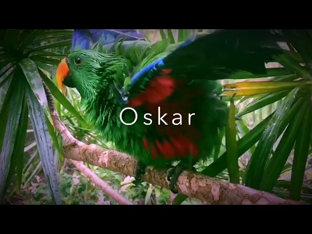 Oskar taking a shower