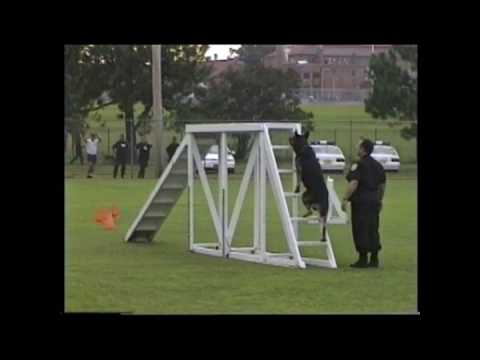Police Dog Agility Youtube