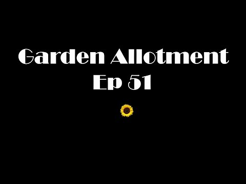 Garden Allotment Ep 51 - Potato, Runner bean & Giant Vegetable sowing