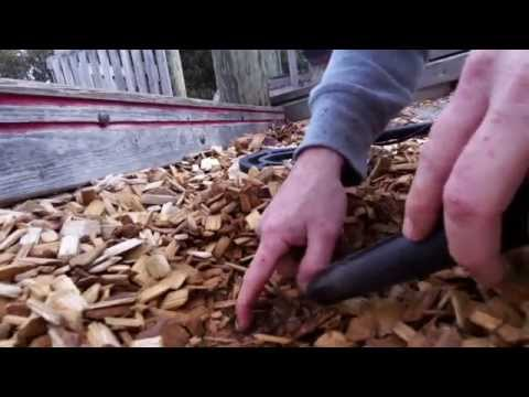 Metal Detecting a Wooden playground  - Lots of COINS
