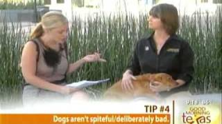 Rebecca Jones - Bark Busters Home Dog Training - Good Morning Texas