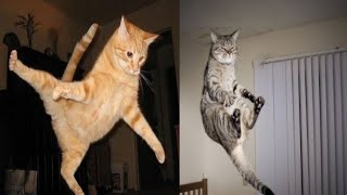 Funny Cats Jumping Fails Compilation | Cat Jumping Fails 2021 | Fun with Pets Tv