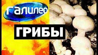 Галилео. Грибы 🍄 Mushrooms