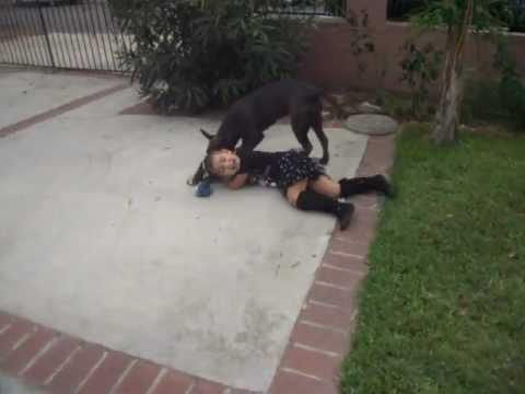 pitbull attacks little girl.
