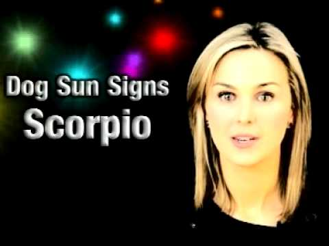 Scorpio Dog starsigns