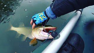 Рыбалка сплавом по реке Щука и Окунь на спиннинг