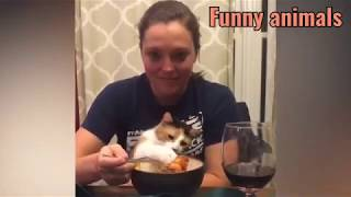 🤣 Funniest 😻Cats And 🐶 Dogs - Try Not To Laugh - Best Of The Funny Videos