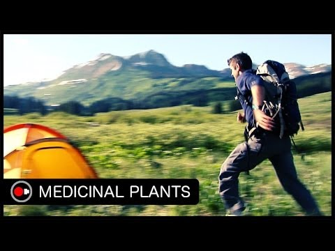 An Intro to Medicinal Plants