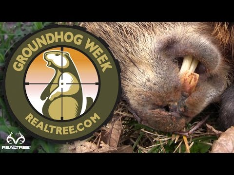 Hunting Groundhogs With Rifles