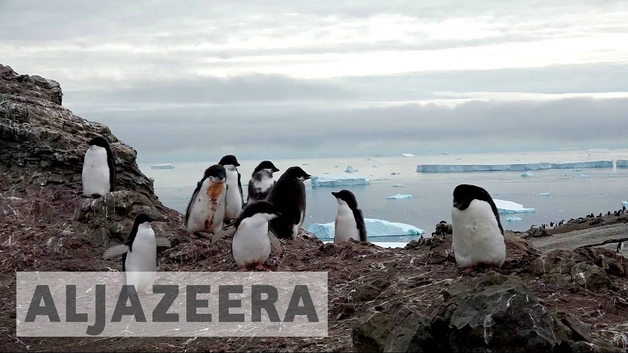 Antarctica penguins move south in search of cold