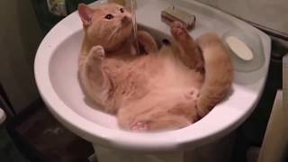 Приколы с котами и кошками для поднятия настроения! Подборка приколов и неудач со смешными котейками