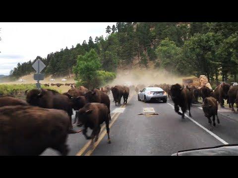 Yellowstone is Shaking... (EARTHQUAKES WORLDWIDE!)