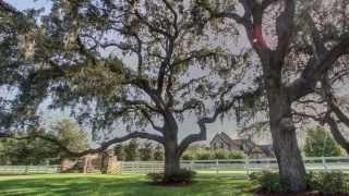 Citrus Green Equestrian Estate
