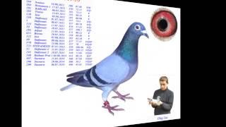 Спортивні ( льотні та розплодові голуби) Олега Лиса.(, 2015-01-23T10:55:10.000Z)
