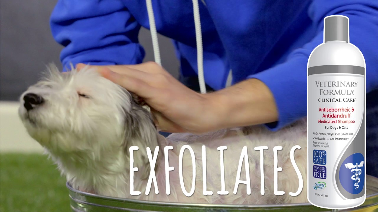 Best Medicated Shampoos for Dogs in 2019