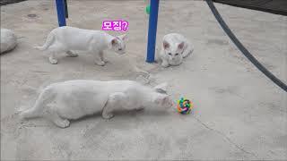 장난감을 처음 본 고양이의 반응 :)