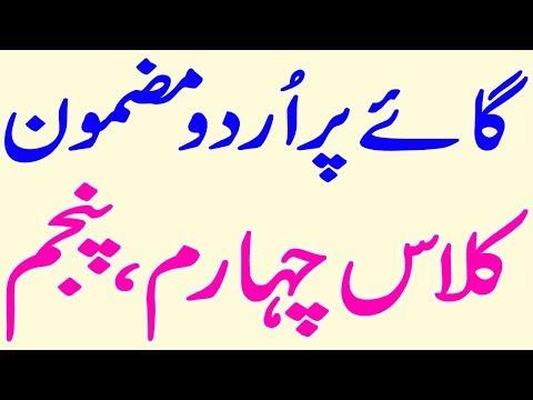 Cow Essay In Urdu   Gaye Per Urdu Mazmoon