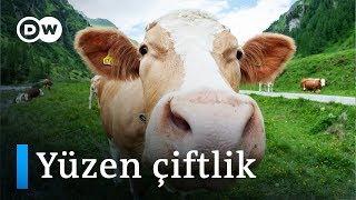 Hollanda'da dünyanın ilk yüzer süt çiftliği kuruldu - DW Türkçe