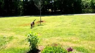 Ayla chasing bugs