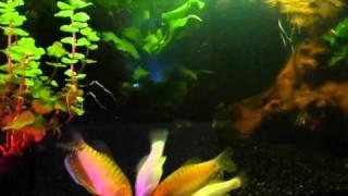 Aquarium Feeding Time