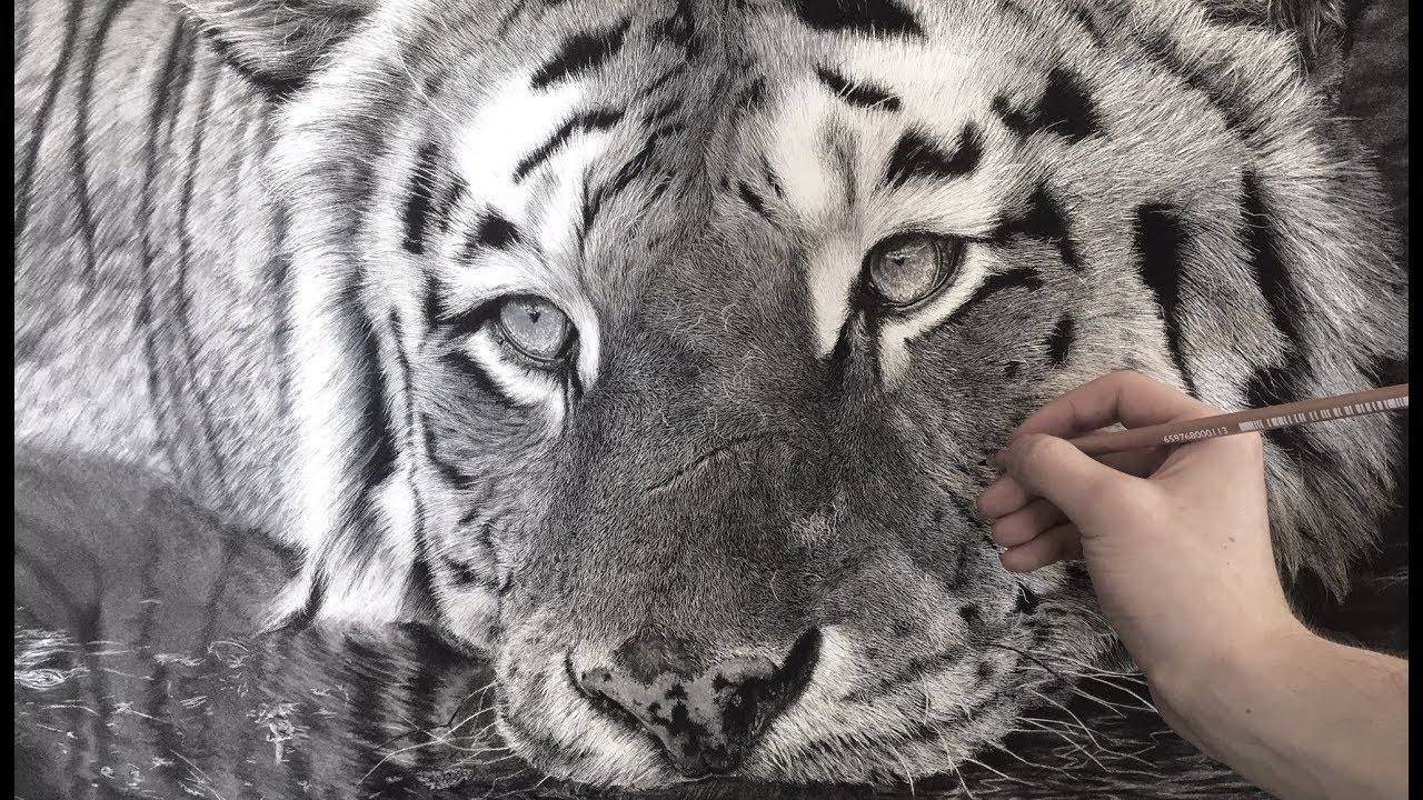 Hyperrealistic tiger drawing 85 hour time lapse