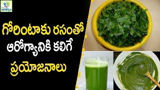 Health Benefits of Henna ( Gorintaku ) - Health Tips In Telugu || Mana Arogyam