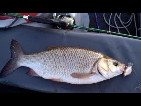 видео: Язь на воблер. Летняя рыбалка на Нижней Волге.