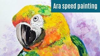 Ara speed painting HD