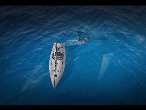 megalodon shark larger than a boat caught on camera 2016