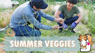 Summer Veggie!🌱 Garden vlog