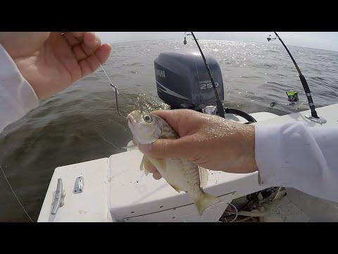 Fishing BIG LIVE BAITS For HUNGRY Fish!! (Chesapeake Bay)