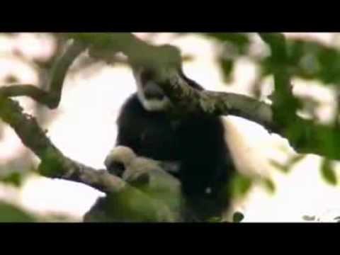Google Wildlife East Africa, mzinyisafarishotels.com kenya