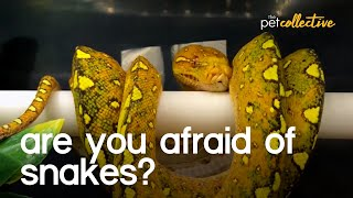 Are You Afraid Of Snakes?