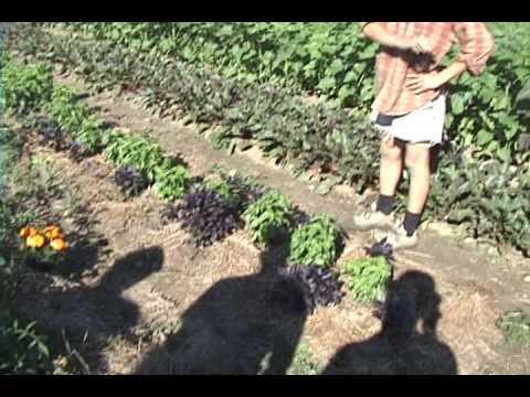 The Cutting Veg Organic Farm