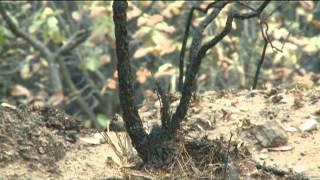 Conanp participará en administración del bosque La Primavera
