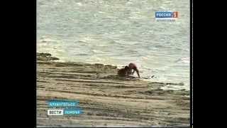 150612 Вести Поморья (4)(Роспотребнадзор настоятельно рекомендует не купаться. В Архангельской области нет ни одного официально..., 2012-06-15T10:26:17.000Z)